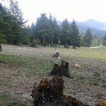 إجتثاث-الغابة-